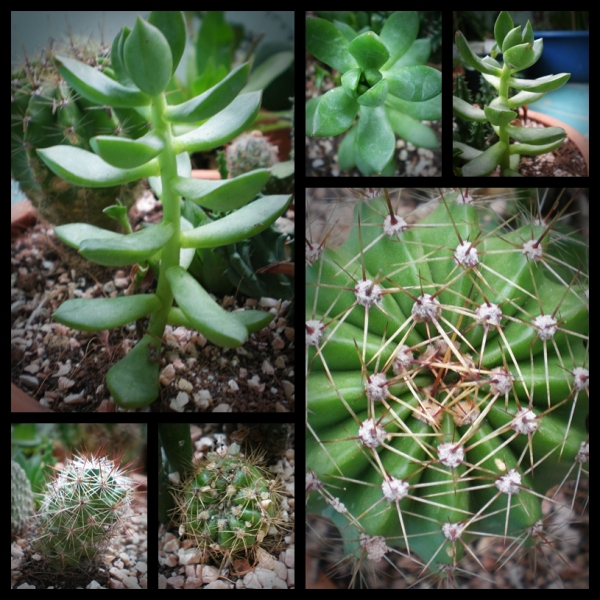 page-cactus-1