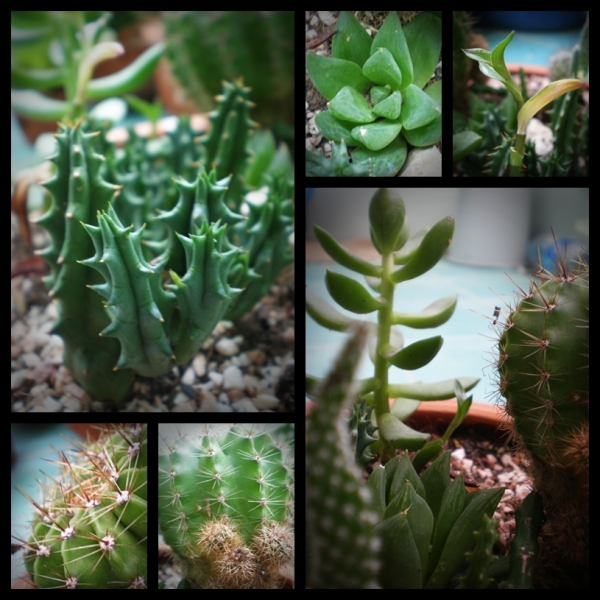 page-cactus-2