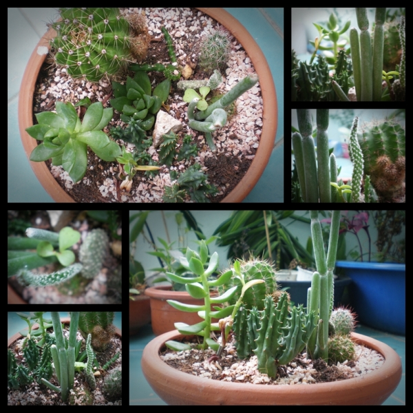 page-cactus-3