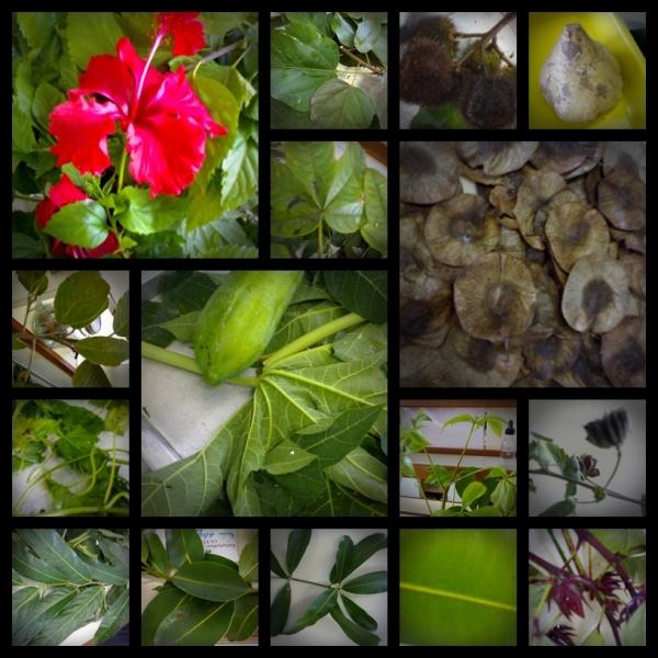 พืชสมุนไพร